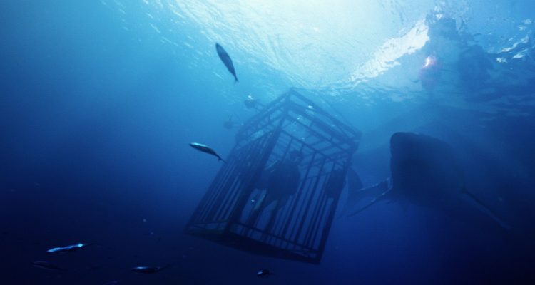 47 Meters Down Scannain Review